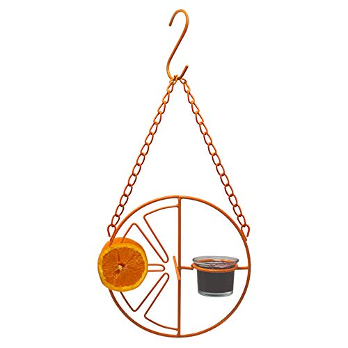 Gray Bunny Oriole Wild Bird Feeder, Orange Clementine Design, Steel Bird Feeder with Landing Perches, 2 in 1 Bird Feeder, Orange Fruit Stick Feeder & Glass Nectar/Jelly Container