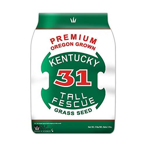 Premium Oregon Grown Kentucky 31 Tall Fescue Grass Seed (5 LBS)