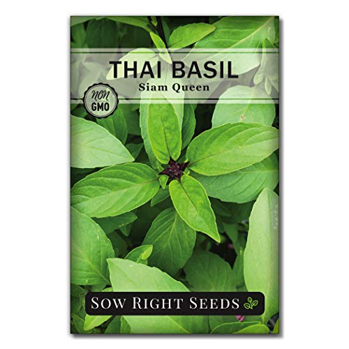 Sow Right Seeds - Sweet Large Leaf Thai Basil Seed for Planting; Non-GMO Heirloom Seeds; Instructions to Plant and Grow a Kitchen Herb Garden, Indoors or Outdoor; Great Gardening Gift