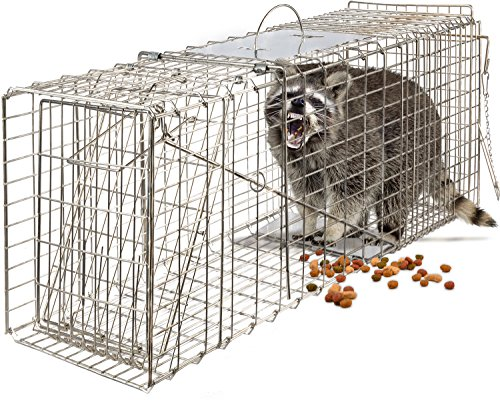 OxGord Live Animal Trap - Humane Catch & Release Large 32' Cage Best for Raccoon, O-possum, Stray Feral Cat, Rabbit & Rodents - No-Kill Bait Trapping Kit - Heavy Duty, 2-Door, Foldable 32' X 12' X 12'